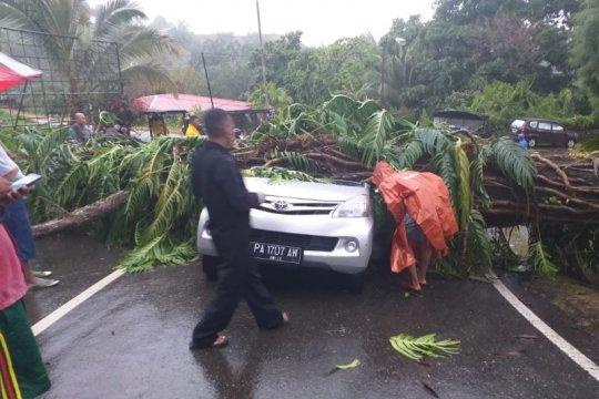 Angin kencang dan hujan sebabkan pohon tumbang di Jayapura