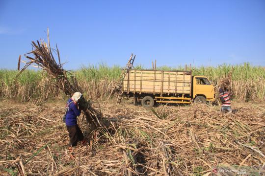 RNI optimalkan program kemitraan petani tebu