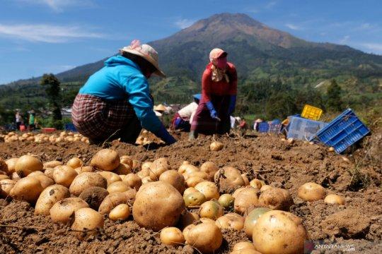 Peneliti: RUU Cipta Kerja buka peluang investasi pertanian