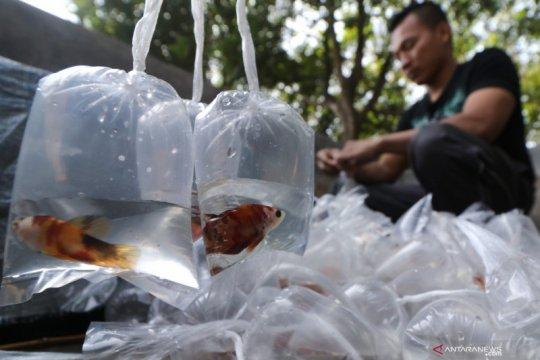 Warga diajak manfaatkan tren ikan cupang sebagai peluang usaha