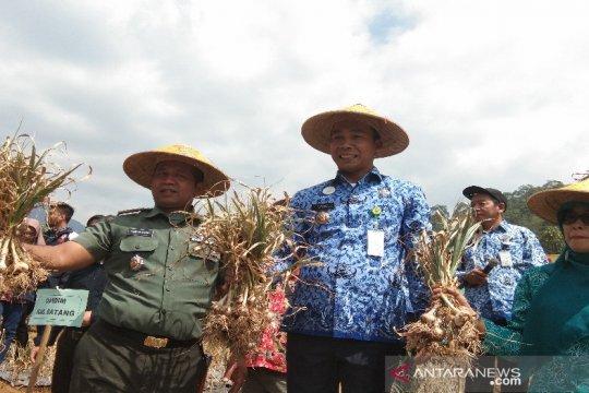 Pemkab Batang dorong petani melakukan budi daya bawang putih