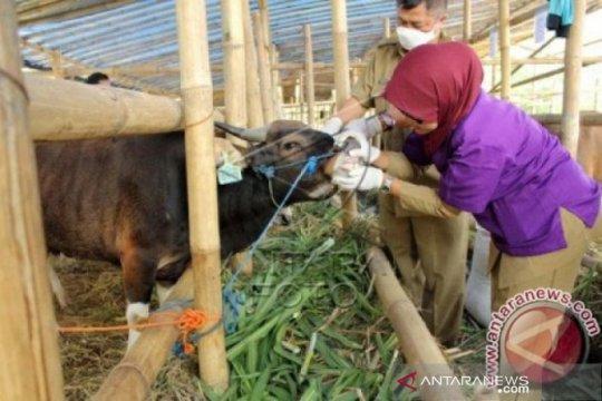 65 mahasiswa FKH IPB bantu pemeriksaan hewan kurban di Depok