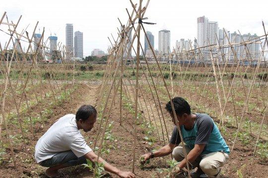 Akhir tahun, Indonesia kirim petani kota ke Tokyo