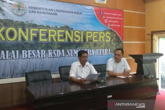 BBKSDA Sumut evakuasi harimau Sumatera ke Sumbar