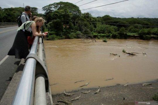 Sungai Dengan Populasi Buaya Terpadat di Dunia Page 3 Small