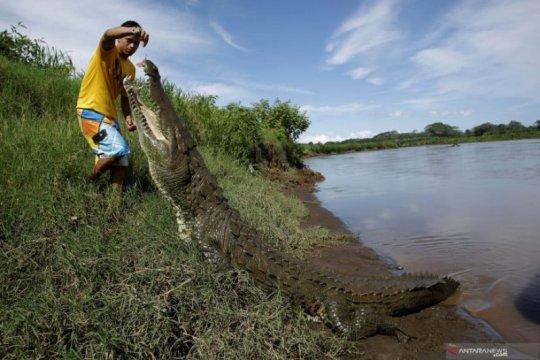 Sungai Dengan Populasi Buaya Terpadat di Dunia Page 5 Small