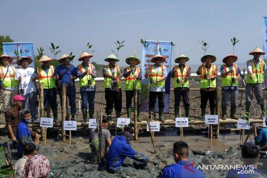 Kerusakan hutan mangrove di Banten capai 60 persen