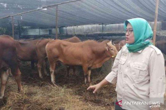 Kekurangan dokter hewan di Bekasi terasa saat Idul Adha