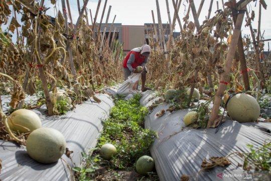BMKG: Peralihan musim ditandai cuaca ekstrem