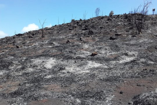 Gunung Botak kawasan wisata Piaynemo Raja Ampat terbakar
