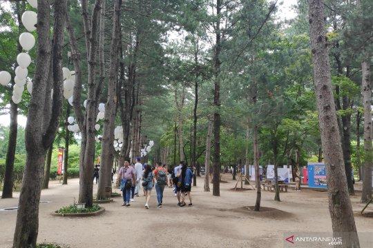Pesona Nami Island pada musim panas Korea