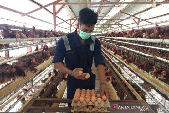 Menjamin konsumsi telur aman hingga ke meja makan