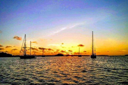 Peserta Wonderful Sail to Indonesia tanam bakau di Desa Debut