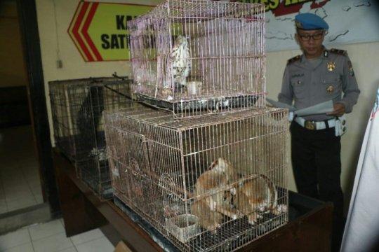 Polisi Kediri amankan warga jual hewan dilindungi