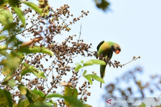 Populasi burung betet biasa terdata di enam RTH Jakarta