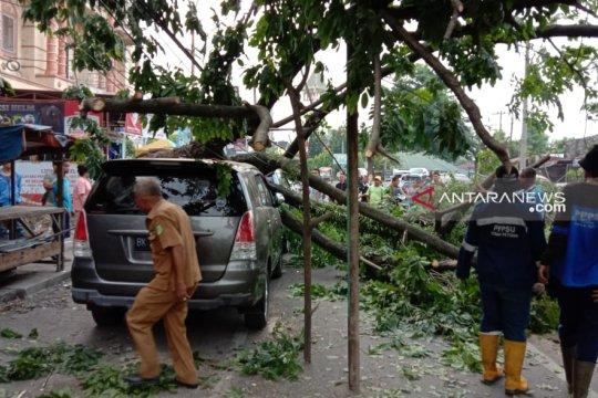 Angin kencang, pohon angsana di Medan timpa tiga Mobil