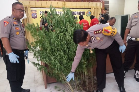 Seorang petani ditangkap polisi karena menanam ganja