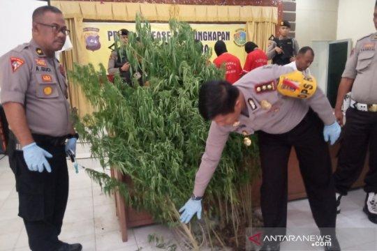 Polres Agam ungkap empat kasus narkotika kurang dari 24 jam
