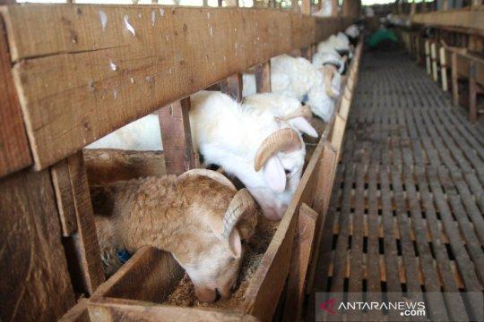 Kementan bangun 21 fasilitas pemotongan hewan kurban