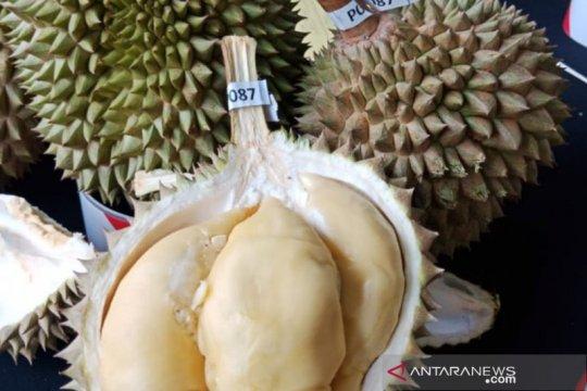 Festival durian digelar warga Pulau Sebatik, perbatasan RI-Malaysia