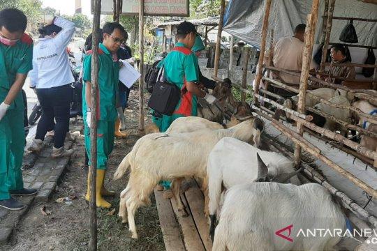 Distan Bangka temukan 30 persen kambing kurban kurang sehat