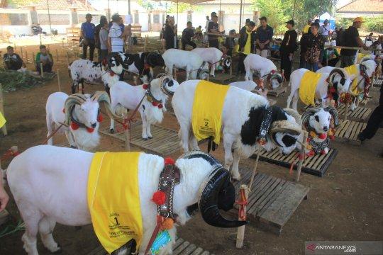 Kontes ternak di Jawa Barat