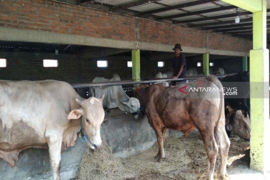 Pemkab Kulon Progo minta panitia urus izin lokasi potong hewan kurban