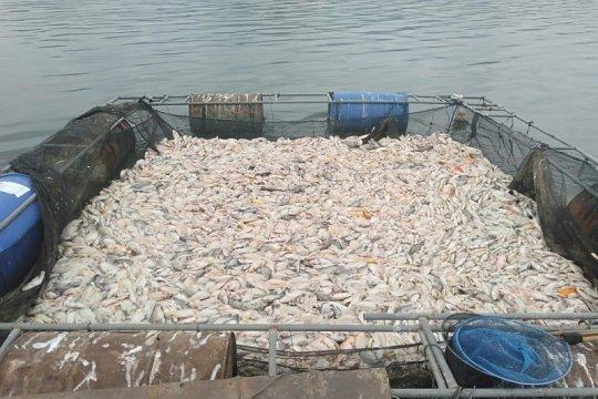 Puluhan ton ikan di Waduk Wadaslintang mati