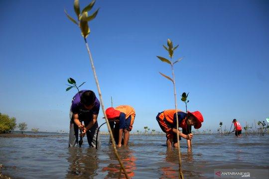 Menanam Mangrove untuk cegah abrasi pantai
