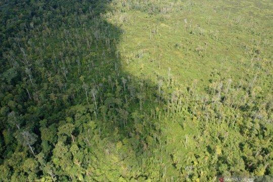 Mighty Earth beberkan temuan deforestasi