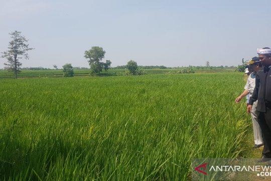 Dinas Pertanian Purwakarta optimistis capai target tanam padi