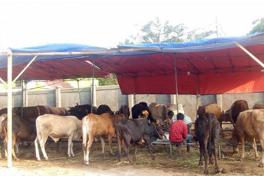 Pemkot Jakut data lokasi penjualan dan pemotongan hewan kurban