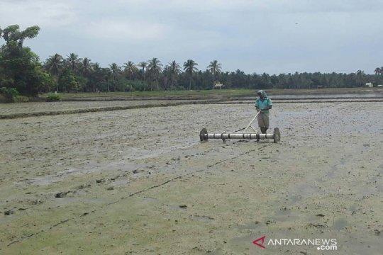Tiga kecamatan di Sanggau akan jadi sentra padi organik perbatasan