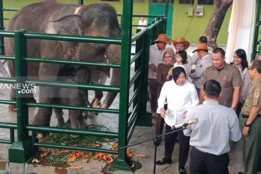 """Wali Kota Risma namai bayi gajah Sumatera itu """"Dumbo"""""""