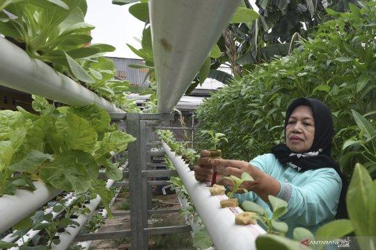 Sistem hidroponik untuk lahan terbatas di Jakarta