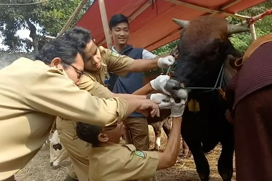 Disketapang Kota Tangerang cek kesehatan hewan kurban