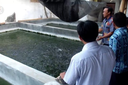 KKP ajak pembudidaya ikan Jember tingkatkan pakan mandiri