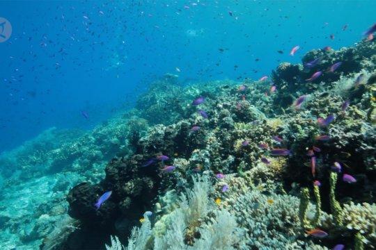 Upaya nelayan Palu pulihkan ekosistem laut usai tsunami