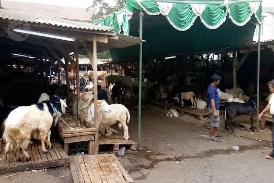 Penjualan hewan kurban di Tanah Abang sudah meningkat