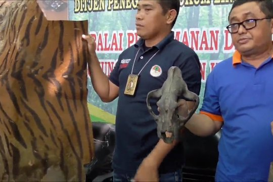 Gakkum LHK Sumut-Aceh amankan kulit Harimau Sumatera