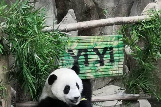 Anak panda di Kebun Binatang Negara dinamakan Yi Yi