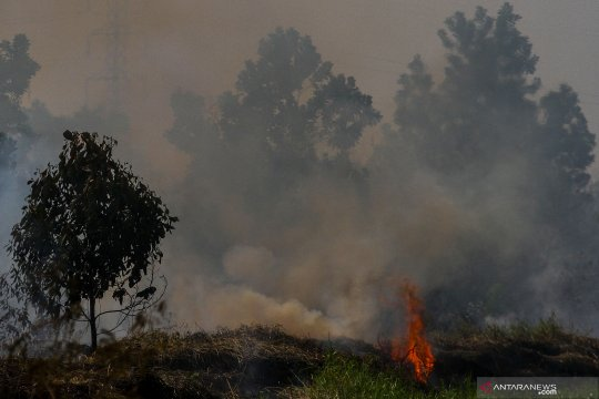 Sempat padam, gambut di TNTN kembali terbakar dan meluas