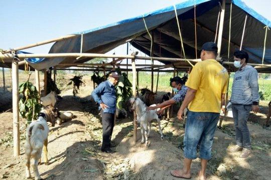 Dinas Pertanian Mataram beri stempel hewan kurban sehat