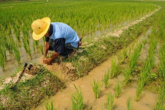 Generasi milenial enggan jadi petani, ini bahayanya