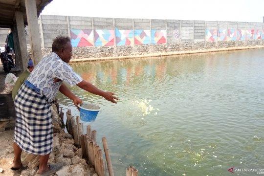 Petambak udang-bandeng Marunda pantau laut antisipasi tumpahan minyak