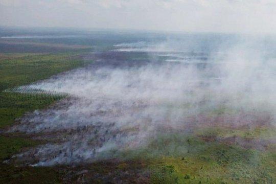 Kebakaran lahan di Kotawaringin Timur meluas ke perkebunan sawit
