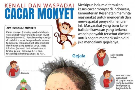 Waspadai cacar monyet