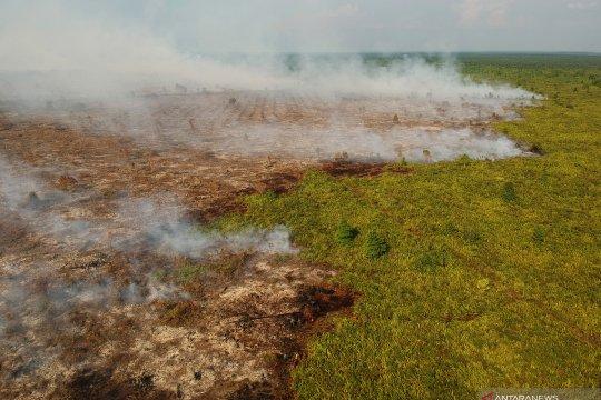 Petugas kesulitan padamkan kebakaran lahan gambut di Kumpeh Ulu