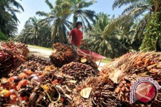 Harga sawit Riau naik Rp34,77 per kilogram