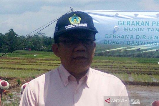 500 hektare padi di Banyumas puso akibat kekeringan